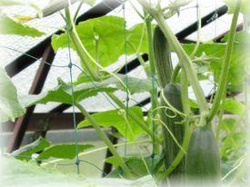 Sieť na vyväzovanie popínavých rastlín
