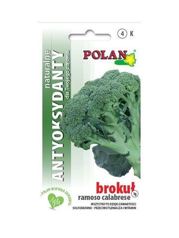 PRÍRODNÉ ANTIOXIDANTY - Brokolica ROMANESCO CALABRESE