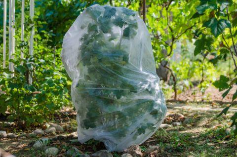 Univerzálny ochranný návlek na rastliny 100x160 cm
